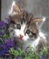 avatar32.jpg